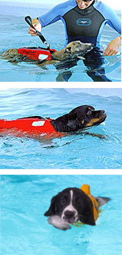 Splash - Canine Hydrotheraphy & Training Centre : Baughurst, Hampshire